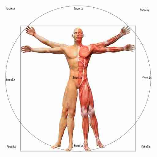 Fitness und Muskulatur